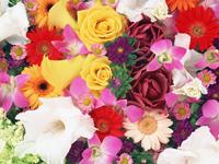 あなたの求めるお花を